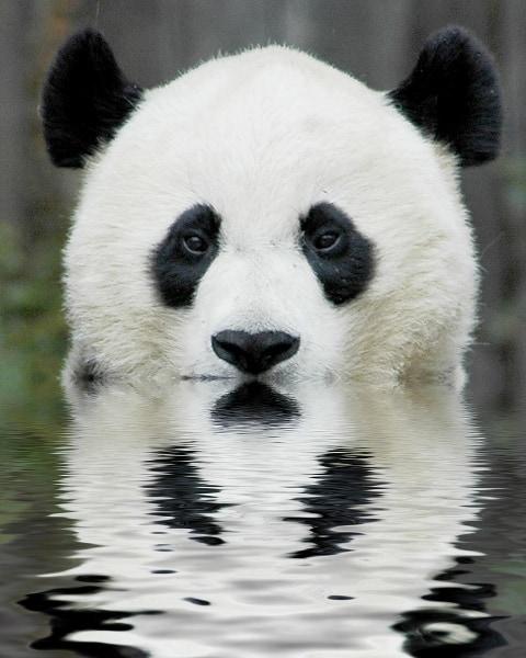 Top 3 Ways Blogs Can Fight Google Panda Update